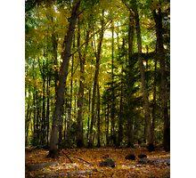 Colorful Underwood Photographic Print