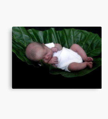 Baby sleeping in leaf Canvas Print
