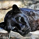 Black Leopard by venny
