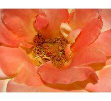 Pinky Peach Photographic Print