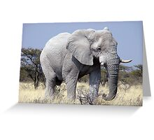 WHITE ELEPHANT Greeting Card