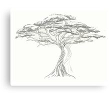 Acacia Shadow , black and white beautiful zen tree  Canvas Print