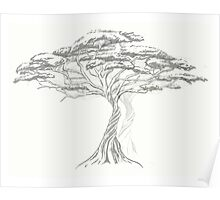 Acacia Shadow , black and white beautiful zen tree  Poster