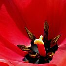 *Tulip Macro* by Darlene Lankford Honeycutt