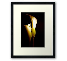 Two Elegant Calla Lily Flowers Against Black   Framed Print