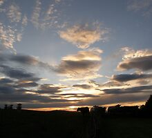 Silouette Cows  (Sun)Set by mikequigley