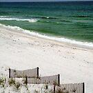 Dunes on the Beach by Jessie Harris