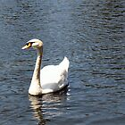 Swan in the Lake by Donna Grayson