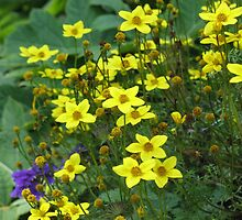 Yellow Flowers by Donna Grayson