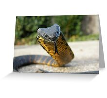 Black and Yellow Kill a Fellow  ( Tiger snake ) Greeting Card