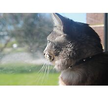 Cat looking at the outside world Photographic Print