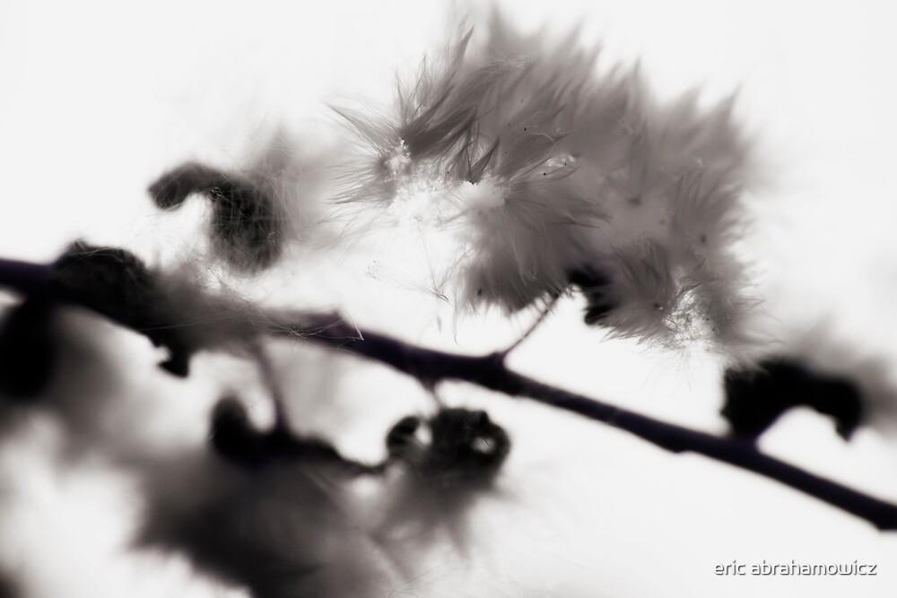 fluff by eric abrahamowicz