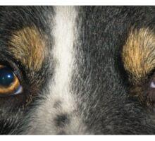 The border collie stare Sticker