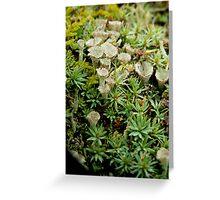 likin' the lichen Greeting Card