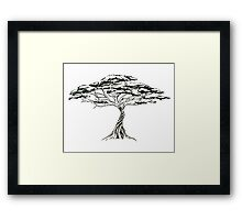 Whistling Thorn , Zen Bonsai African Tree Black and White Framed Print