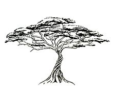 Whistling Thorn , Zen Bonsai African Tree Black and White Photographic Print