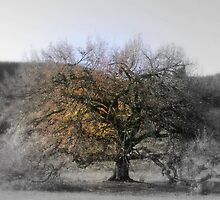 Tree of Life by Rashmita B-C