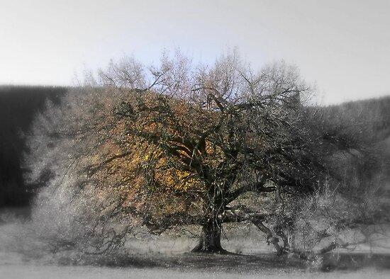 Tree of Life by Rashmita & Raj