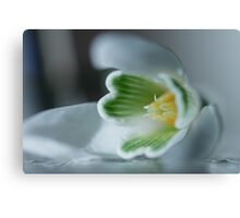 Found a SnowDrop in my Garden Today  - JUSTART © Canvas Print