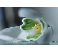 Found a SnowDrop in my Garden Today  - JUSTART © Photographic Print