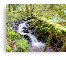 Irish Forest Canvas Print