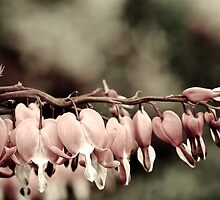 fuschia or dicentra Branch by Matt Sillence