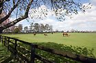 Irish National Stud by John Quinn