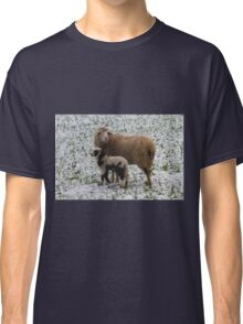 sheep and lambs in the snow Classic T-Shirt