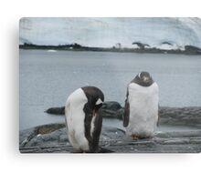 Penguin I Metal Print