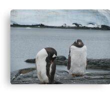 Penguin I Canvas Print