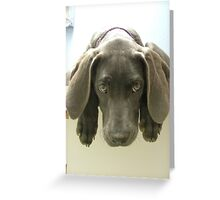 Look What You Can Get at the  Shelter Greeting Card