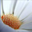Daisylicious... by Mary Trebilco