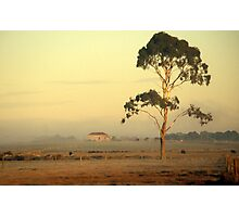 A red roof in Gippsland Photographic Print