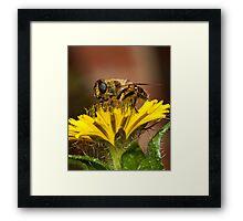 Pollen Feast Framed Print