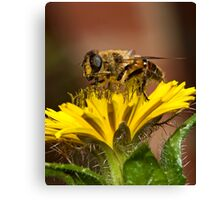 Pollen Feast Canvas Print