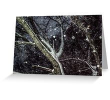 Trees In The SnowStorm Greeting Card