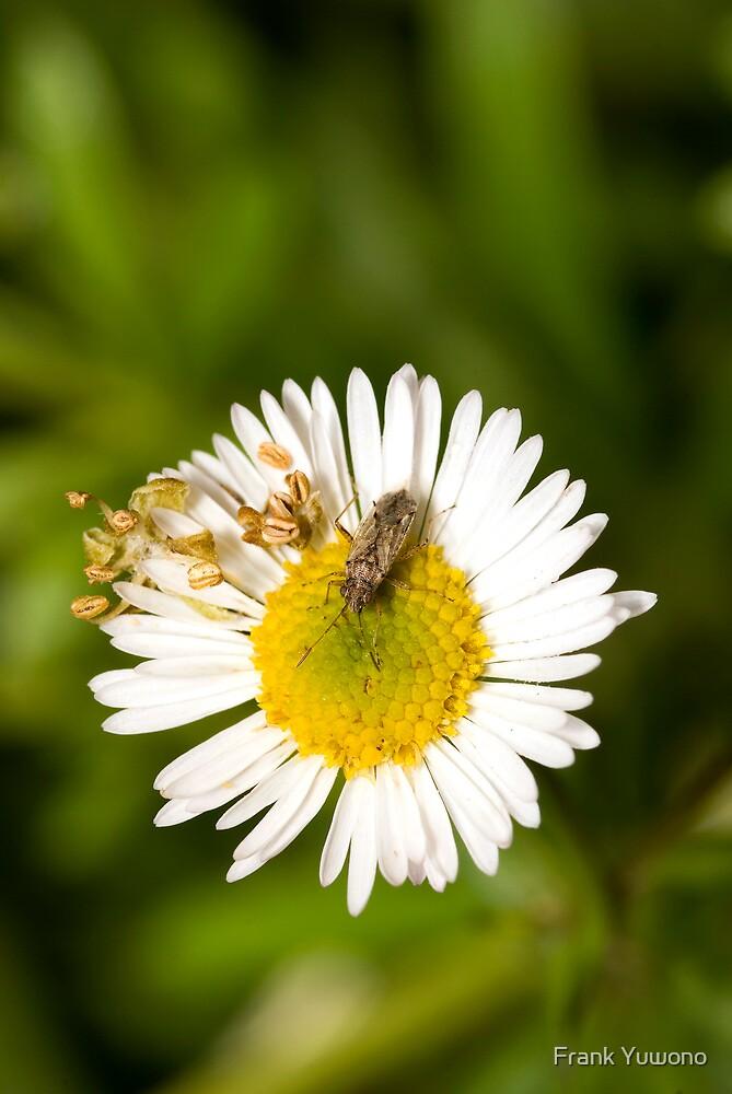 Bug on Flower by Frank Yuwono