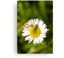 Bug on Flower Canvas Print
