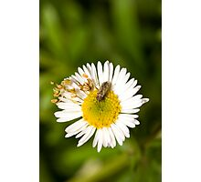 Bug on Flower Photographic Print