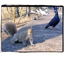Got Nuts? Photographic Print