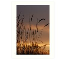 GRASS AND SUNSETS Art Print