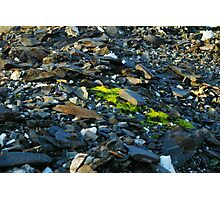 Shale and Moss Photographic Print