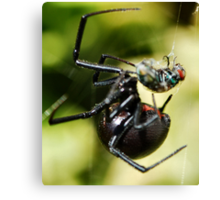 The Black Widow and The Fly Canvas Print