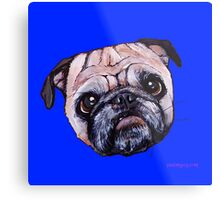 Butch the Pug - Blue Metal Print