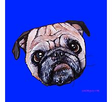 Butch the Pug - Blue Photographic Print