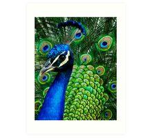 Colorful Peacock Art Print