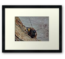 Here's Looking at You !! Framed Print