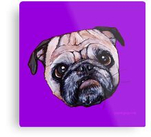 Butch the Pug - Purple Metal Print