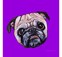 Butch the Pug - Purple Photographic Print