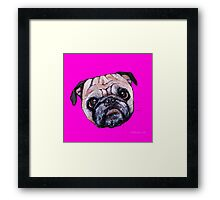 Butch the Pug - Pink Framed Print